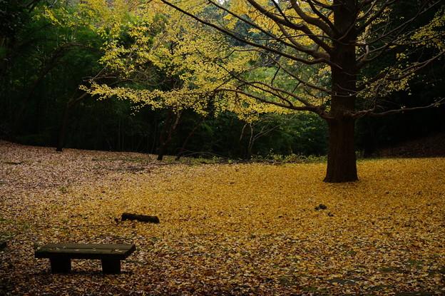 薄日差す黄色の広場