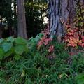 森のグラデーション