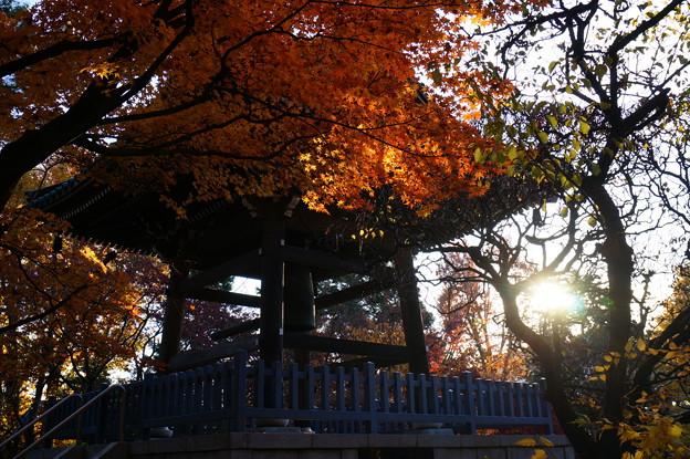鐘楼に朝陽差す 3