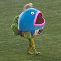 写真: 謎の魚