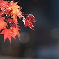 写真: 秋の陽