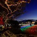 写真: 光の木 光の広場