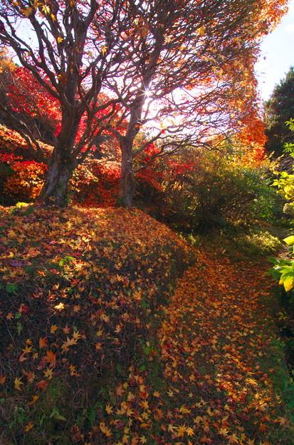 秋の終わりは鮮やかに