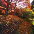 写真: 秋の終わりは鮮やかに