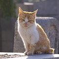 Photos: 墓場の猫太郎