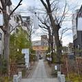 写真: 溝の口神社にて