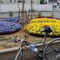 写真: DSC_7054 小田急沿線、登戸駅にて