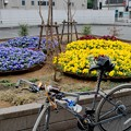 Photos: DSC_7054 小田急沿線、登戸駅にて
