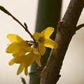 Photos: 小さな春