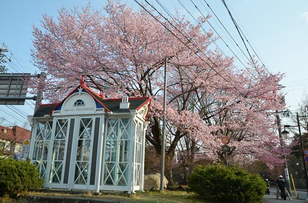 桜とバイクと電話ボックスと。
