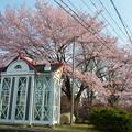 Photos: 桜とバイクと電話ボックスと。