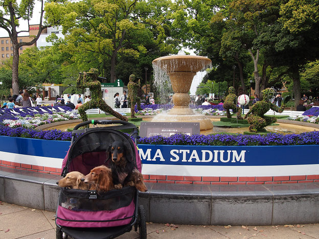 写真: 横浜公園(スタジアム)の緑化フェア