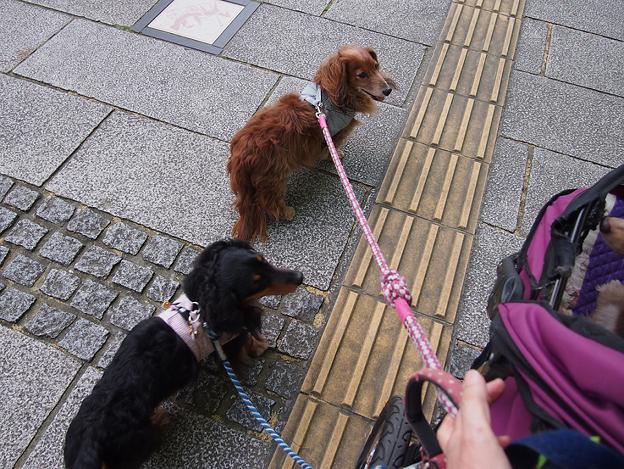写真: 日本大通りを歩くブルー