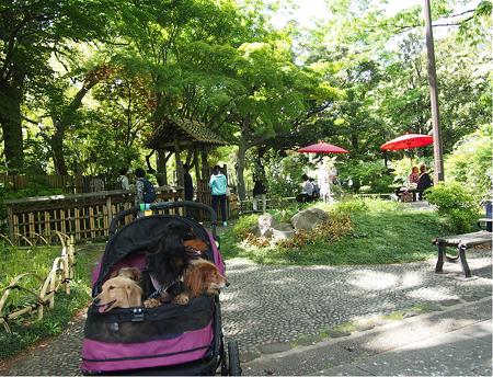 緑化フェア横浜公園の彼我庭園(ひがていえん)