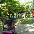 写真: 緑化フェア横浜公園の日本庭園