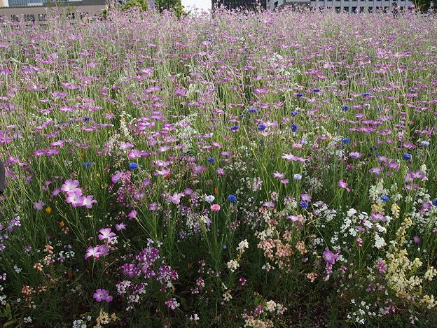 緑化フェア『象の花パークの種だんご畑』