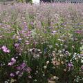 写真: 緑化フェア『象の花パークの種だんご畑』