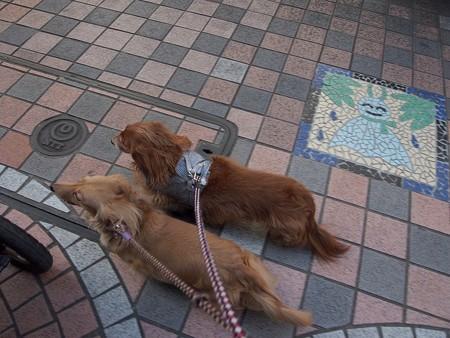 日曜散歩は忙しい?