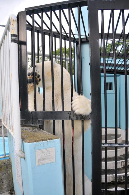 20170914釧路動物園NO.25