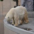 Photos: 20170914旭山動物園NO.45
