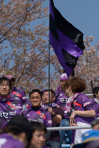 写真: 桜に舞う旗