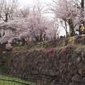 Photos: 大王わさび農園