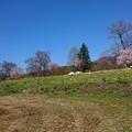 菜の花公園