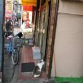 Photos: 猫09
