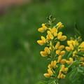 帯広 「六花の森」 170530 05