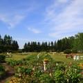 写真: 帯広 「紫竹ガーデン」 170530 03