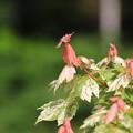 Photos: 帯広 「真鍋庭園」 170531 06