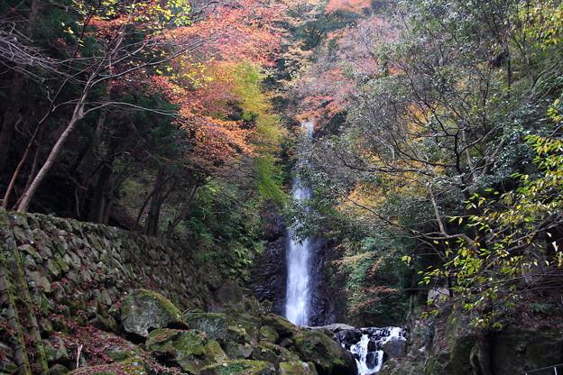 岐阜 養老の滝 151202 02