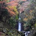 写真: 岐阜 養老の滝 151202 02