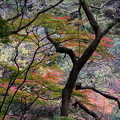 写真: 岐阜 養老の滝 151202 04