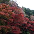 写真: 岐阜 養老の滝 151202 05
