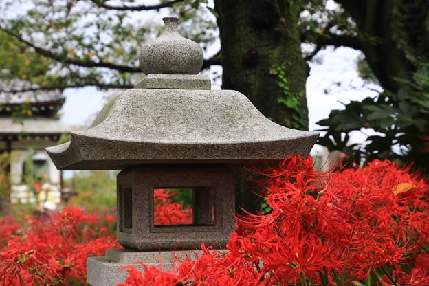 写真: 太田 常楽寺 170923 02