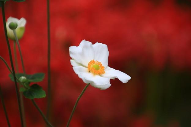 写真: 太田 常楽寺 170923 05