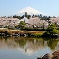 富士山 120409 03 富士宮大石寺から