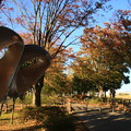 近隣の紅葉風景 171109 01 さきたま緑道