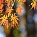 近隣の紅葉風景 171109 02 赤見台近隣公園