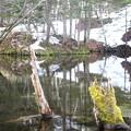 写真: 裏摩周 「神の子池」 130515 01
