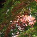 比企 嵐山渓谷 171121 04
