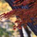 写真: 比企 嵐山渓谷 171121 05