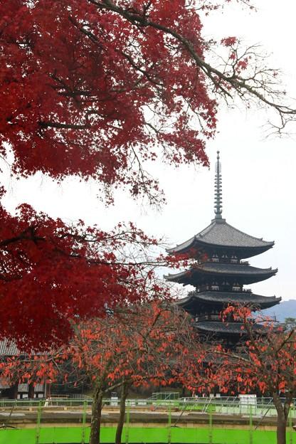 興福寺 171129 04
