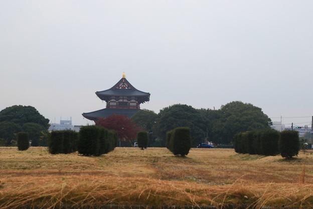 写真: 平城宮跡 171129 01