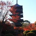 写真: 東寺 171202 04