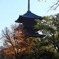 写真: 東寺 171202 05