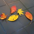 Photos: 「秋の忘れ物・・・」・・・・
