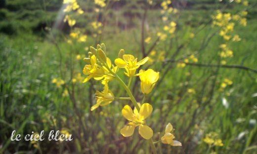 光の中の黄色い花