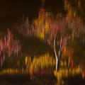 写真: 秋の夢